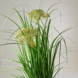 Astragalus im Topf mit 2 Dolden