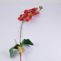 Orchidee extra mit Wurzel, verschiedene Farben