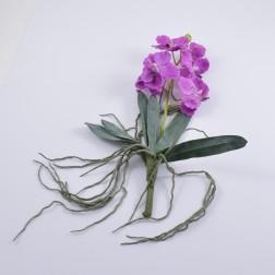 Orchidee Wanda mit Wurzel, lila
