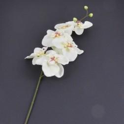 Phalaenopsisrispe 6 Blüten creme