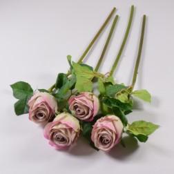 Rose Ramires, 60 cm, verschiedene Farben
