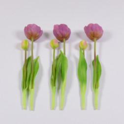 Tulpenbund Monte Carlo, 27 cm offen, verschiedene Farben