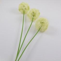 Allium Divo 69 cm, creme