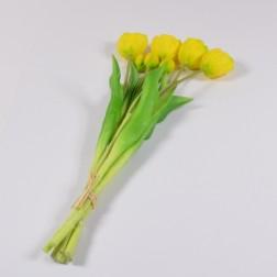 Tulpenbund Monte Carlo, offen, gelb/grün
