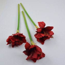 Amaryllis 3 BL 50 cm, verschiedene Farben
