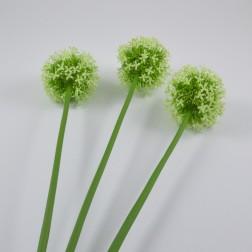 Allium Diano, verschiedene Farben und verschiedene Größen
