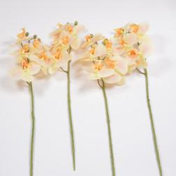 Orchidee Marina, verschiedene Farben