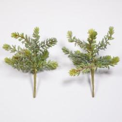 Sukkulente, 25 cm gruen