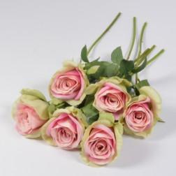 Rose Naomi, creme-rose