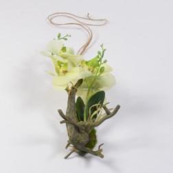 Orchidee mit Wurzel x 2, verschiedene Farben