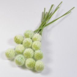 Allium Arles, verschiedene Farben