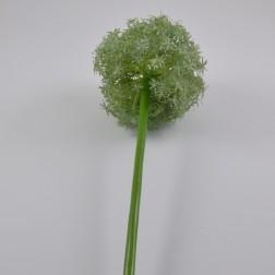 Allium Queen, 19 cm, grün (creme ausverkauft)