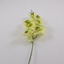 Phalaenopsis Janina, 83 cm, verschiedene Farben