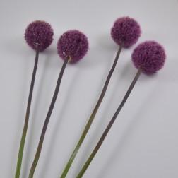 Allium Antiga, verschiedene Farben