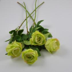 Rose Diron, verschiedene Farben