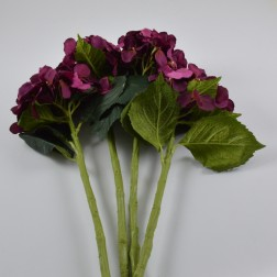 Hydrangea Artist, verschiedene Farben