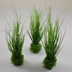 Gras mit Ballen, verschiedene Größen