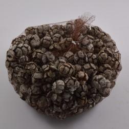 Cypressus, verschiedeneFarben