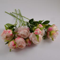 Paeonia Marisa 40 cm, verschiedene Farben