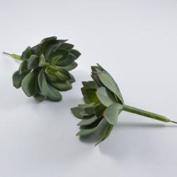 Succulente Grandino, verschiedene Größen