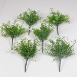 Mini Starflower Bush