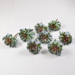 Sukkulente Tiana grau/rosa, 11 cm
