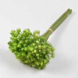 Hypericum Bouquet x 5 grün