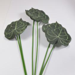 Alocasiablatt, 72 cm