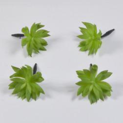 Echeveria Meria 11 cm grün