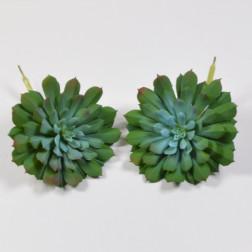 Echeveria agavoides blau, 16 cm