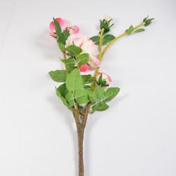 Rose Dolorus, 100 cm