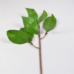 Magnoliablatt