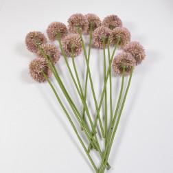 Allium Sentino 44 cm rosa