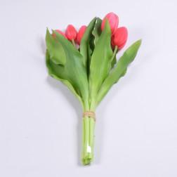 Tulpenbund Alina, verschiedene Farben
