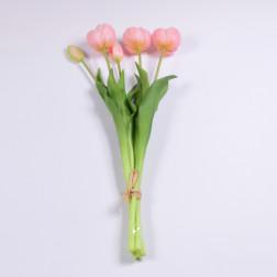 Tulpenbund Ella x 5, verschiedene Farben