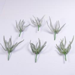 Succulente Rhodos, 16 cm, grün