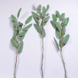 Eukalyptuszweig m. Frucht 70 cm