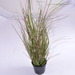 Gras im Topf