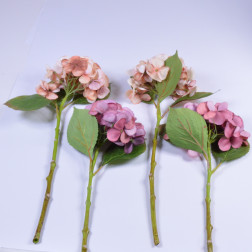 Hydrangea Emily, 48 cm, peach/purple