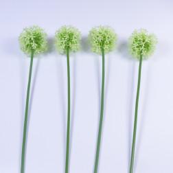 Allium Diano
