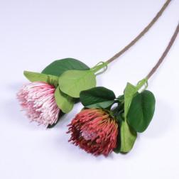 Protea Nutans, 66 cm, sort.