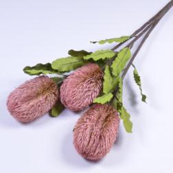 Protea Dora, 65 cm, rosa