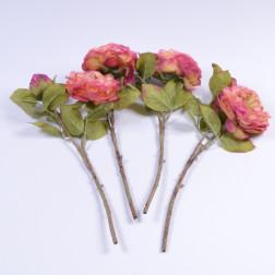 Rose Amira, 33 cm, peach